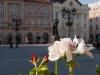 Cvetni centar