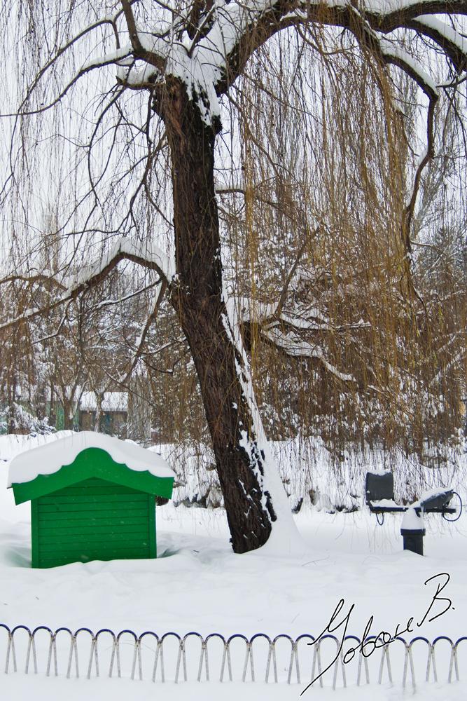 zima2012-14
