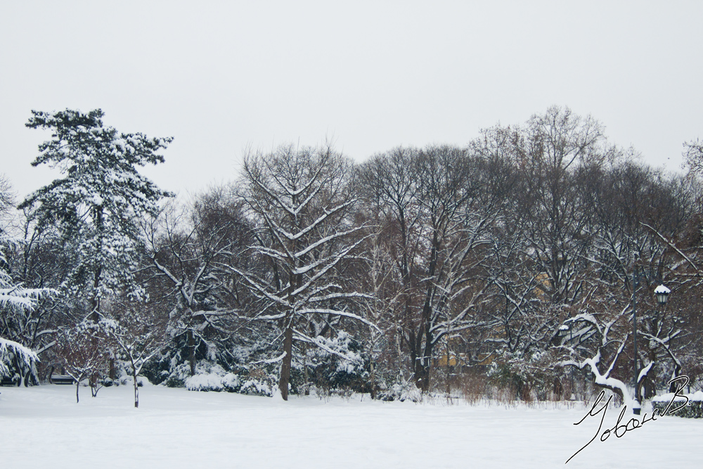 zima2012-15