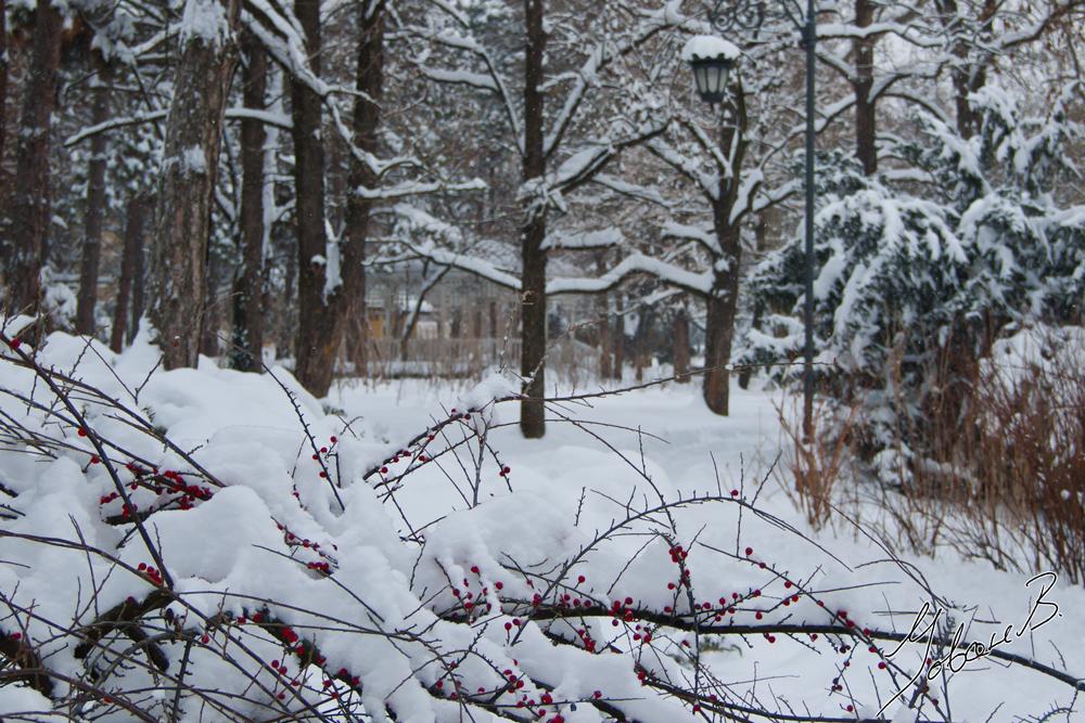 zima2012-16
