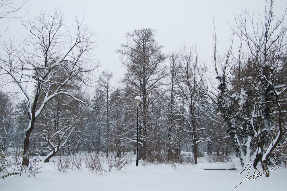 zima2012-2