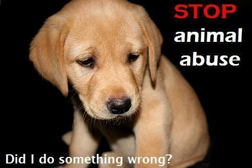 stop-animal-abuse-now-against-animal-cruelty-15061765-500-333